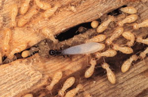 best quality termite and pest control los angeles