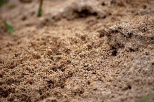 Ant Exterminator LA