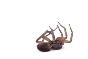 Spider Control Los Angeles