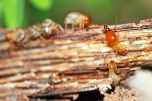 Termite Control Los Angeles